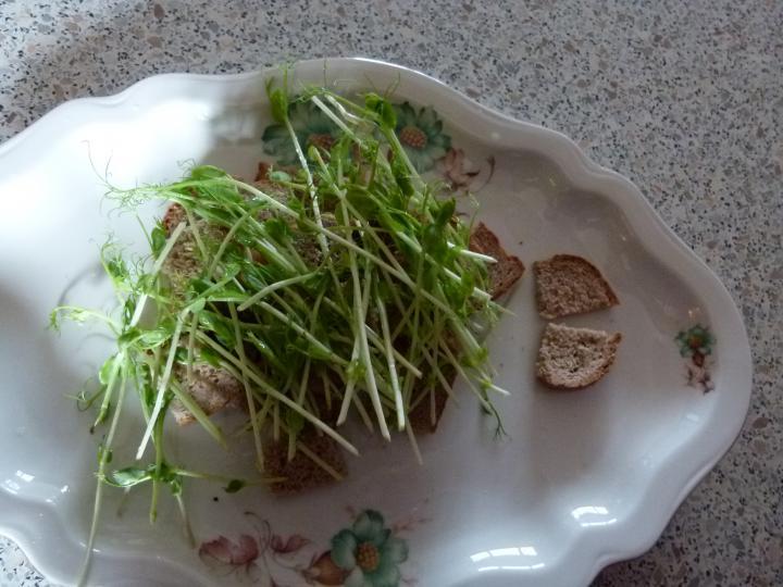 Borsócsírás csirkés saláta elkészítés 4. lépés képe